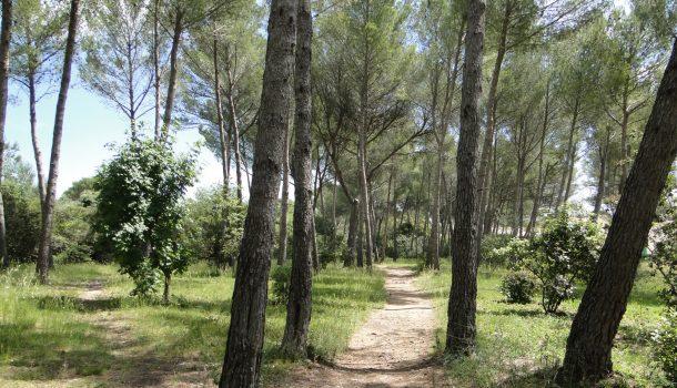 Environnement à Jacou