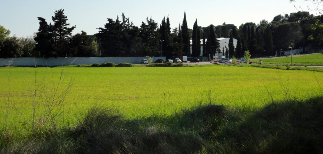 Sécheresse dans l'Hérault en 2018