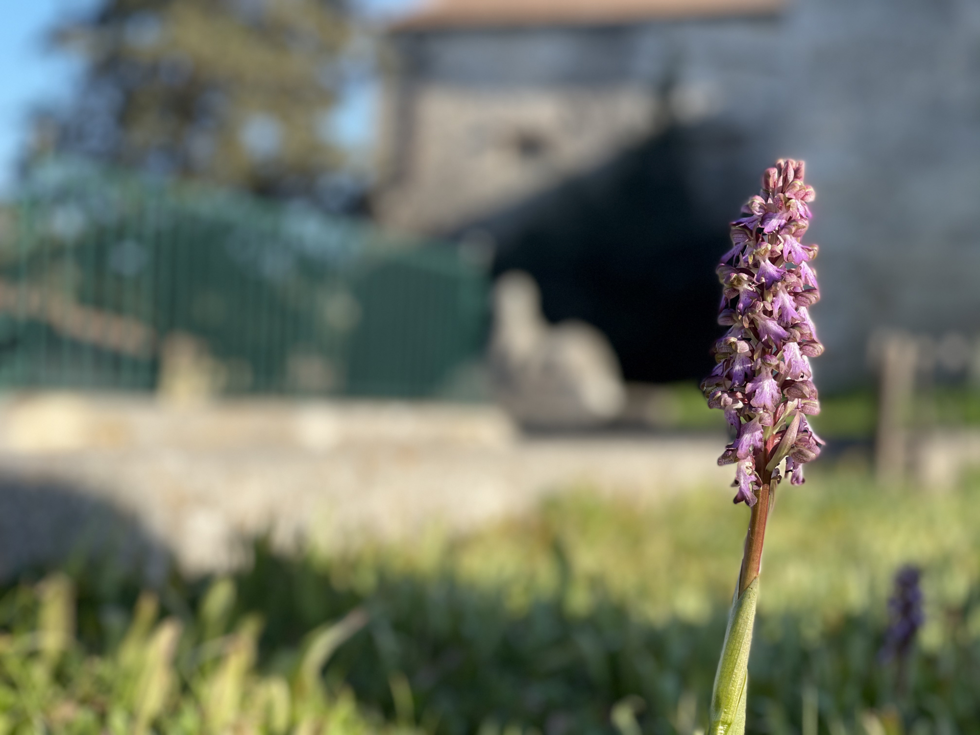 Les fleurs du jardin classé du domaine de Bocaud